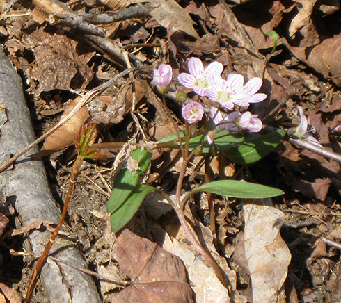 Spring Wildflower Walk, Sunday May 6