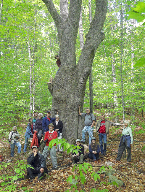 Forester Arthur Westing led another informative hike to the largest White Ash tree in Vermont.