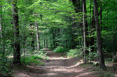 Trail on the Bald Hill Reserve, Bellows Falls Union High School Forest Section